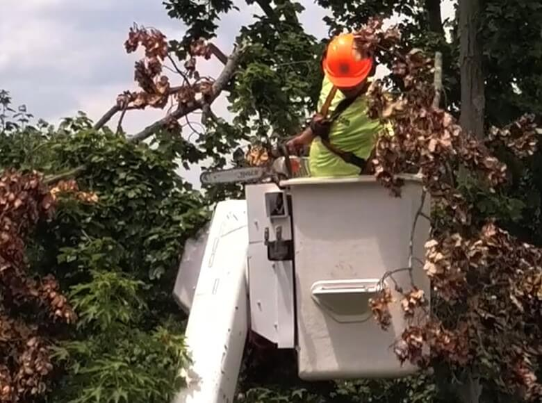 Tree Service Fort Wayne | Monster Tree Service Fort Wayne