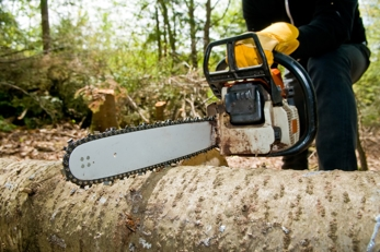 Plymouth, MN Tree Cutting Service