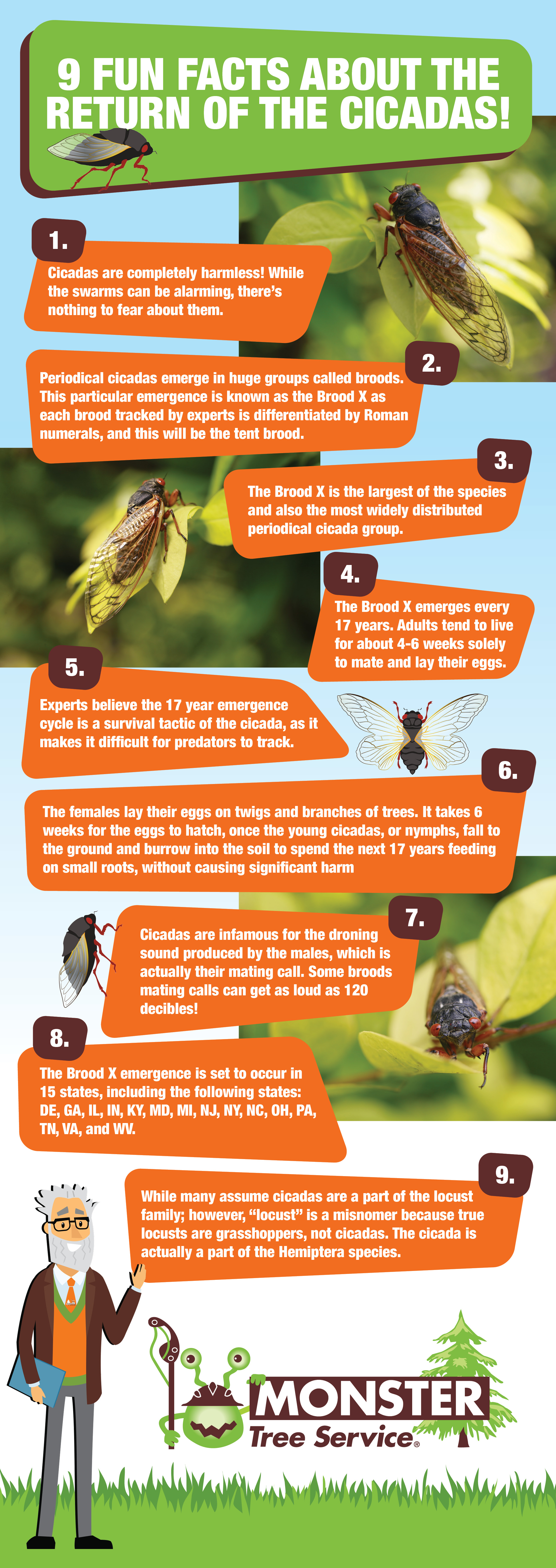 9 Fun Facts About Cicadas!