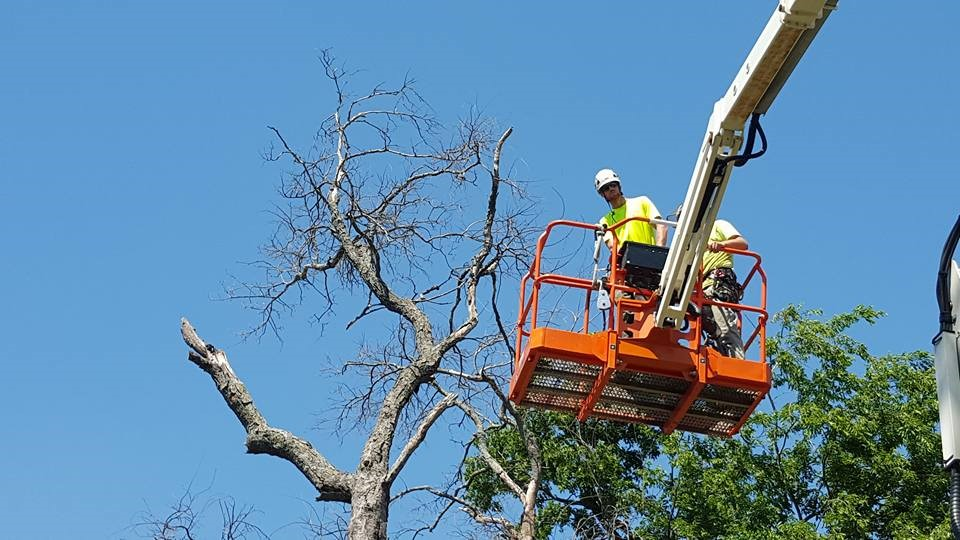 Plano, TX Tree Pruning Services