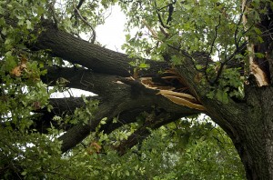 North Wales & Lansdale, PA Tree Removal Services