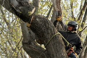 Devon, PA Tree Removal Service