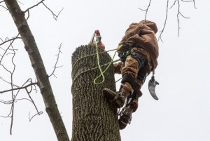 Phoenixville, PA Tree Removal Service