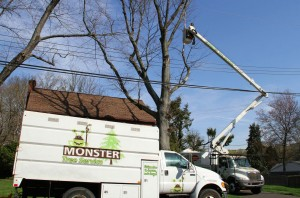 Berea, OH Tree Care Services