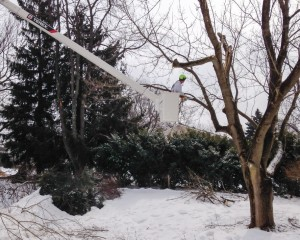 West Chester, PA Tree Removal Services