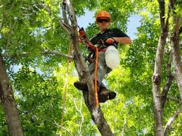 Arborist working in tree