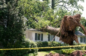 Tree Removal in Flower Mound, TX